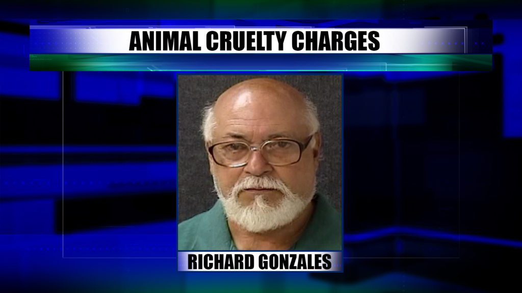 A 63-year-old man is in jail after police seize 43 dogs from his home this morning.